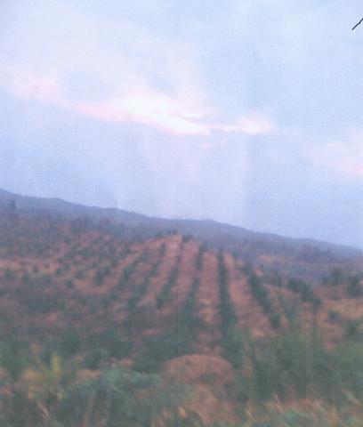Foto: Mendesak Jual Tanah  55 Hektar Rp. 35,000/meter